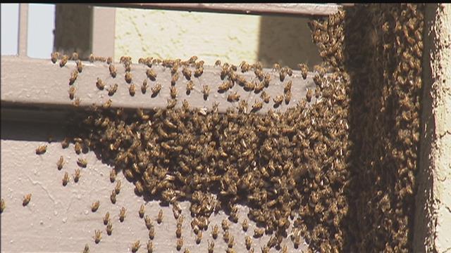 Swarm of bees delays Matchbox Twenty concert