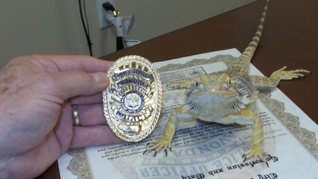 Bearded dragon 'sworn in' as AZ police officer