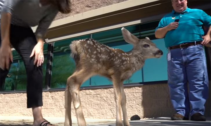 3-Day-Old Deer Pulled From Wild To Spend Life In Captivity
