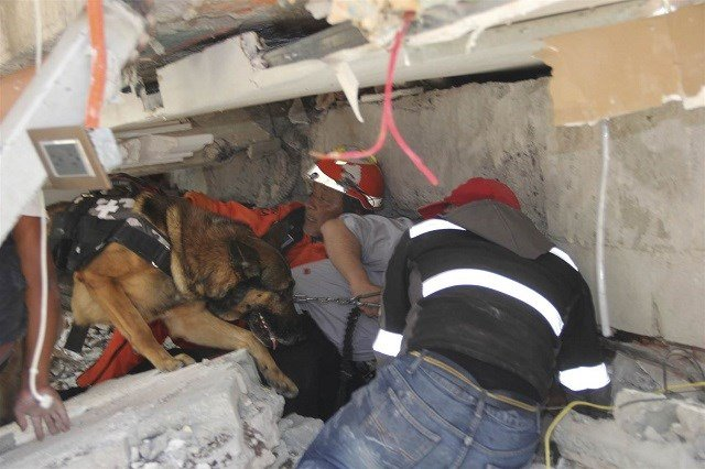 Workers and a rescue dog search for children trapped inside the collapsed Enrique Rebsamen school on Tuesday. Carlos Cisneros / AP via NBC