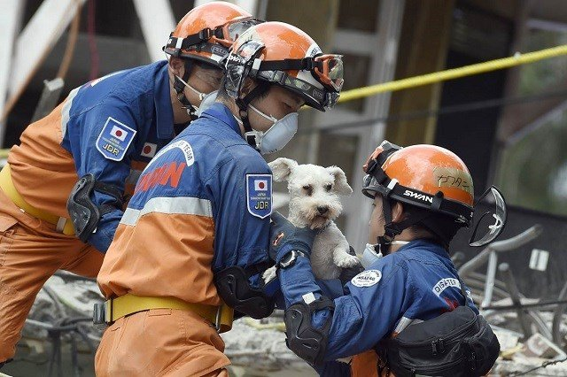 A dog is pulled out from a collapsed building. Alfredo Estrella / AFP - Getty Images via NBC