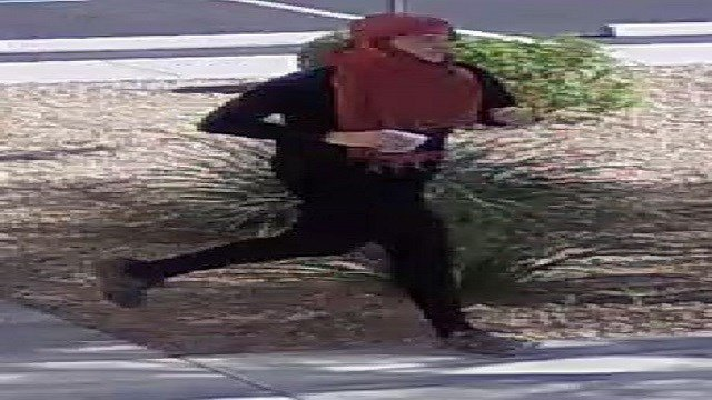 'Shaky Bandit' caught on I-75 after Collier bank robbery