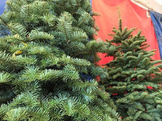 Holiday season to begin at Don's Tree Farm Nov