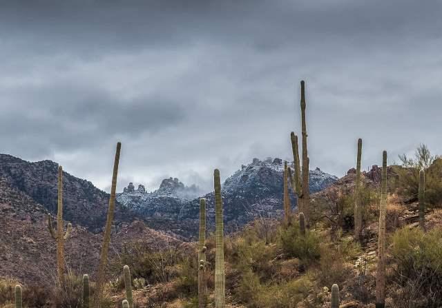 Sunday at Sabino Canyon. Photo courtesy: Wendy Witzig