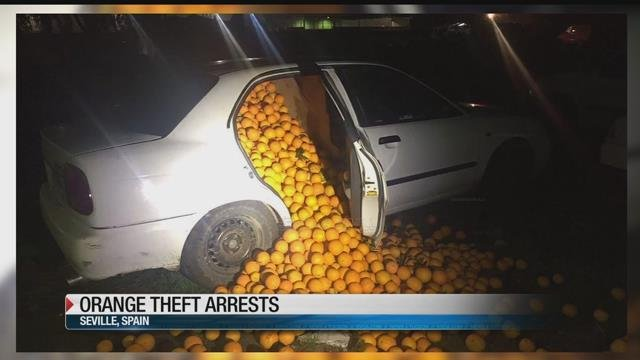 Police pull over a vehicle and oranges come tumbling out