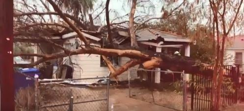 Tree falls on home in Mesa. Courtesy: Mesa FD