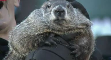 """Punxsutawney Phil """"predicts"""" an early 2016 spring"""