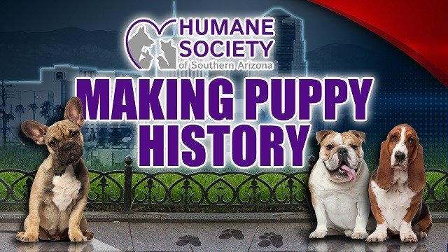 Humane Society of Southern Arizona to attempt world record for most dogs in a photo